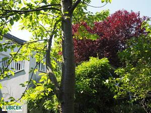 Repräsentatives Zweigenerationen Haus mit Praxis/Ordination/Büro
