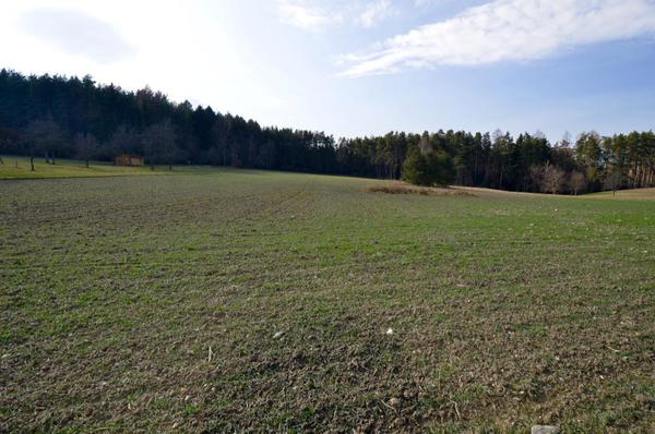 AUSSENANSICHTEN - Waldblick