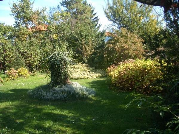 INNENANSICHTEN - Objekt 197 Garten 1.jpg