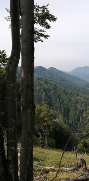 Wald zum Kuscheln,Bäume umarmen, Brennholzmachen, pachte Dir Deinen eigenen Wald